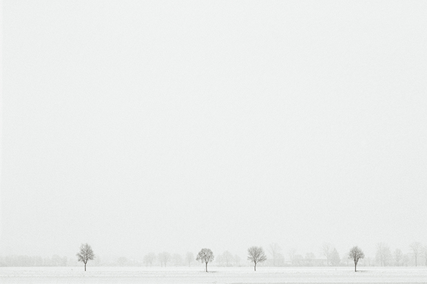 From the series 'White Forest' by Yang Liu, 2014 Landscape Photographer of the Year.