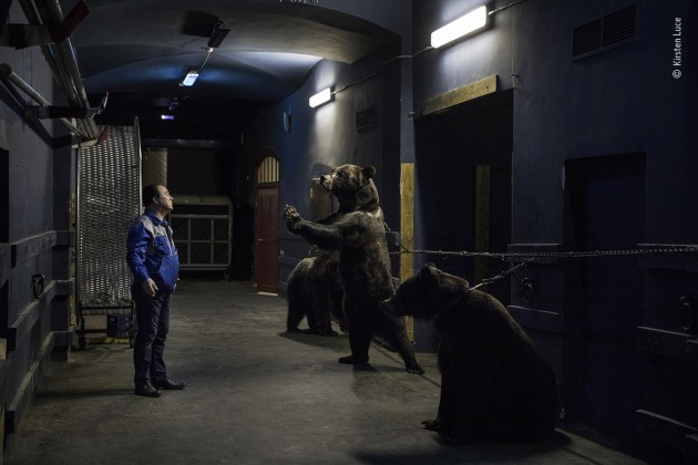 Backstage at the circus by Kirsten Luce, USA At the Saint Petersburg State Circus, bear trainer Grant Ibragimov performs his daily act with three Siberian brown bears. The animals rehearse and then perform under the lights each evening. In order to train a bear to walk on two feet, Kirsten was told that they are chained by the neck to the wall when they are young to strengthen their leg muscles. Russia and Eastern Europe have a long history of training bears to dance or perform, and hundreds of bears continue to do so as part of the circus industry in this part of the world.
