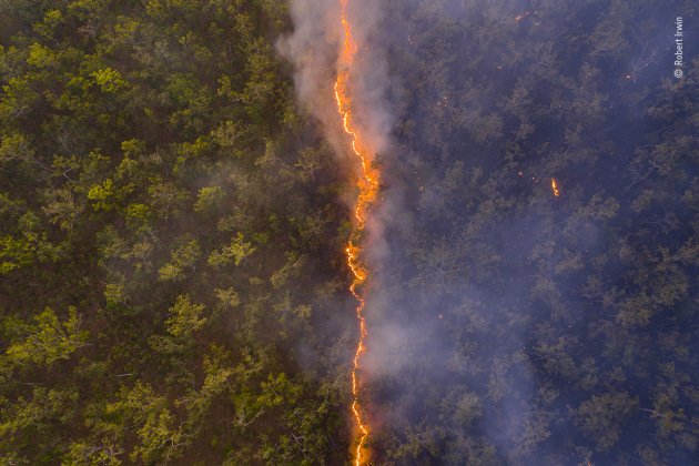 Bushfire by Robert Irwin, Australia A fire line leaves a trail of destruction through woodland near the border of the Steve Irwin Wildlife Reserve in Cape York, Queensland, Australia. The area is of high conservation significance, with over 30 different ecosystems found there, and is home to many endangered species. The fires are one of the biggest threats to this precious habitat. Although natural fires or managed burns can be quite important in an ecosystem, when they are lit deliberately and without consideration, often to flush out feral pigs to hunt, they can rage out of control and have the potential to devastate huge areas.