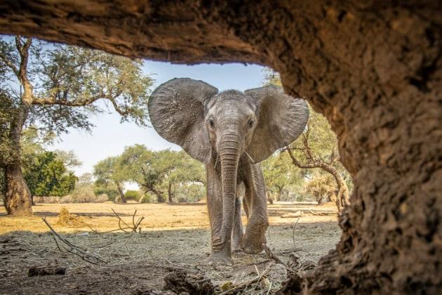 Elephant by Tom Svensson