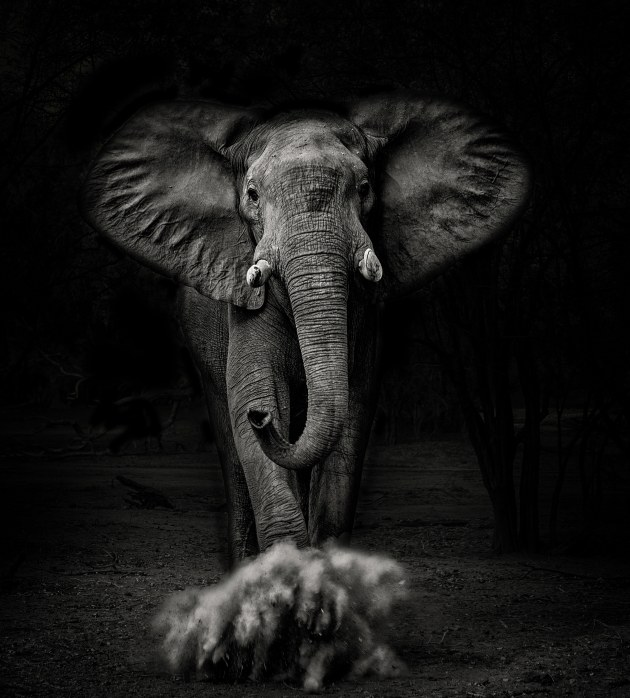 © Graham Morgan. Zambezi Welcome. People's Choice - winner. 634 votes.