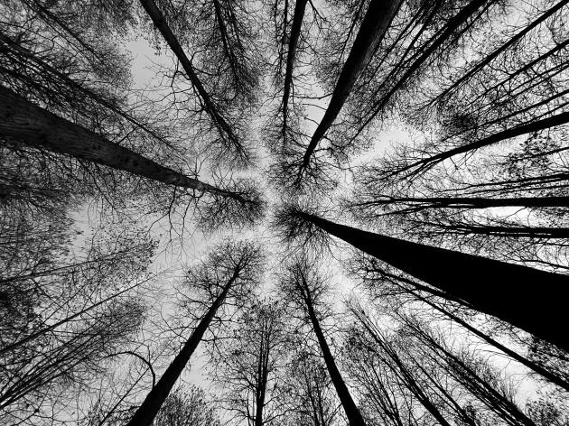 Wei Xiong, China. 2nd Place – Trees