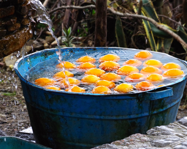 ISABELLA SMITH (AGE 14), USA WINNER, YOUNG TRAVEL PHOTOGRAPHER OF THE YEAR 2018. Chefchaouen, Morocco. Perfect newlypicked oranges were everywhere in Chefchaouen, Morocco! Pentax K-S2, 200mm lens, f14, 1/200s, ISO 400.
