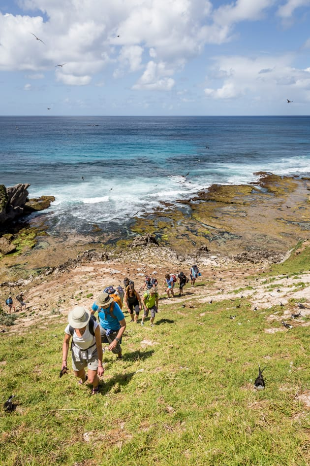 Birdlife abounds on Lord Howe. Photo: Luke Hanson.