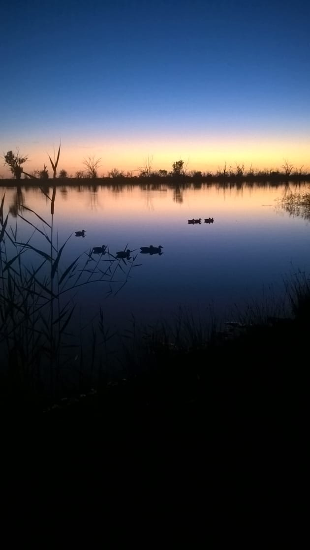 Hayden Smith  duck decoys at dawn