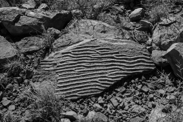 A fossil found on the Larapinta Trail, NT. Brent McKean.