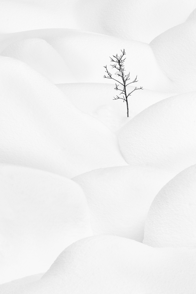 The shapes of the snow-covered boulders here created the feel of a landscape within a landscape. This small tree acts as a contrast to the snow and emphasises the feeling of a brutal and hard winter. Seven image stack. Nikon D810, Nikon 200-500mm f/5.6 lens. 1/30s @ f13, ISO 64.