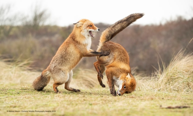 © Alastair Marsh / Comedy Wildlife Photo Awards 2019
