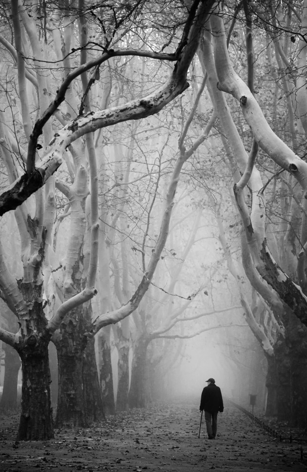 2nd Prize Winner, General - Black and White. Anna Niemiec, Poland. The Silent Witness. Over two-hundred-year-old trees in the center of Szczecin (Poland); silent witnesses of many human stories. An old man strolls through these old trees in the quiet of Autumn, like seasons reflecting a passage of time.