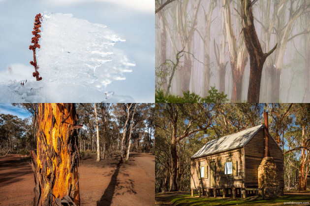 Clockwise from top-left: Baw Baw NP, Yarra Ranges NP, Kara Kara NP, Greater Bendigo NP