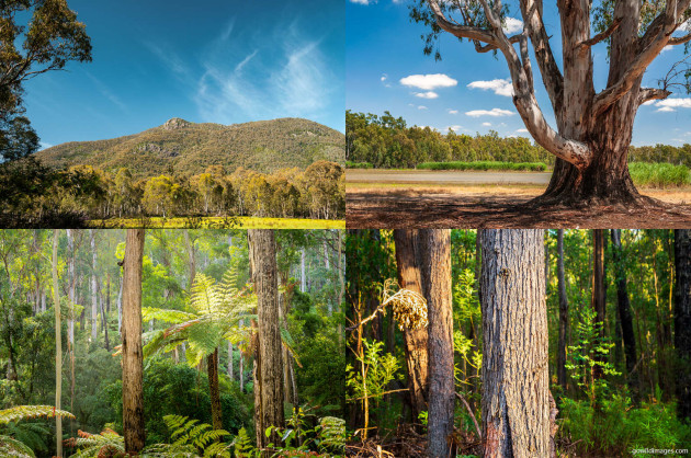 Clockwise from top-left: Burrowa-Pine Mountain NP, Barmah NP, Alfred NP, Lind NP