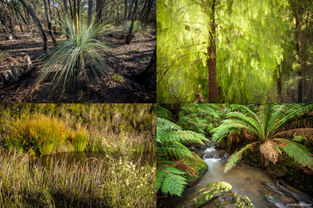 Clockwise from top-left: Brisbane Ranges NP, Coopracambra NP, Tarra-Bulga NP, Cobboboonee NP