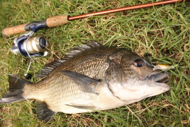Bream Off The Bank Fishing World