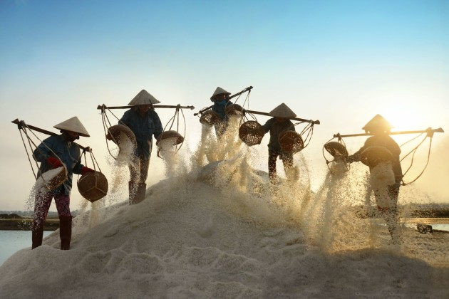 Salt farmers collecting salt in Vietnam
