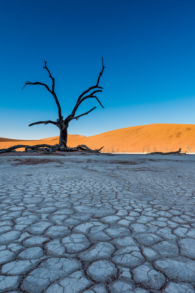 Deadvlei – Namibia, Africa. I lay on the ground, resting my ultra-wide lens and camera on my elbows. By focusing about a third of the way into this scene and using a small aperture, the cracked earth back towards me was in focus, as were the tree and sand dunes. The image was composed so that the tree was off-centre. Also, timing was of the essence. This image was taken at sunrise, just as the shadow of the sun was at the very bottom of the sand dunes. Nikon D800, 14-24mm f/2.8 lens @ 14mm. 1/400s @ f8, ISO 200. +0.33EV.