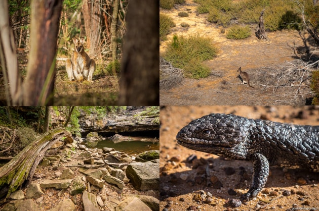 Clockwise from top-left: Errinundra NP, Wyperfeld NP, Little Desert NP, Mitchell River NP
