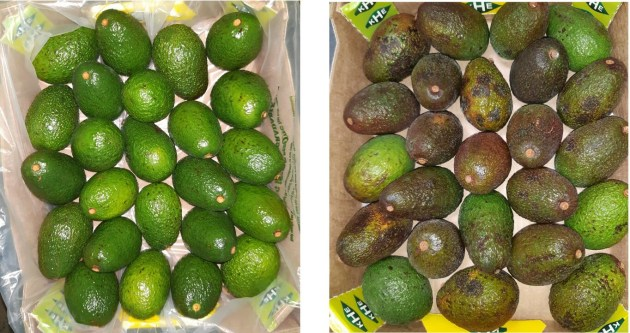 Hass avocadoes packed in Flexfresh (left image) versus control delivery (right).