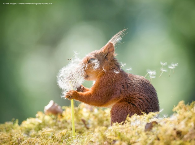 © Geert Weggen / Comedy Wildlife Photo Awards 2019
