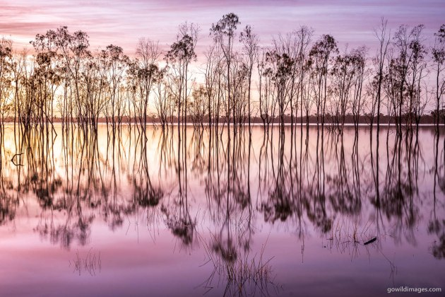 Hattah-Kulkyne NP Mournpall Morning – Painterly sunrise textures of flooded trees on Lake Mournpall. HDR composite of three frames, with a 2-stop spread. Nikon D600, 16-35 mm f/4 at 30 mm, 1.0 sec at f/8.0, ISO 100, tripod