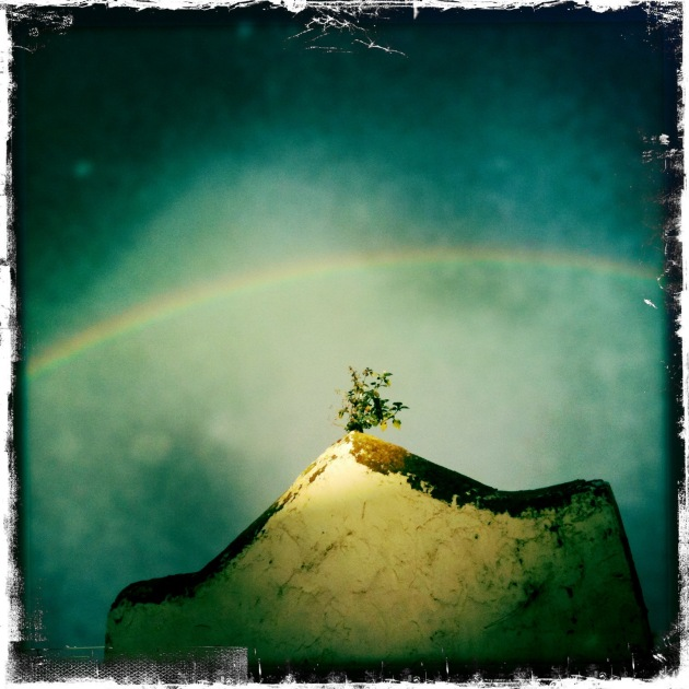 """This photograph of a rainbow was captured from my back gate looking over an old Victorian era """"out house"""" in my neighbours backyard. The photo was made with an iPhone, but don't judge me!"""