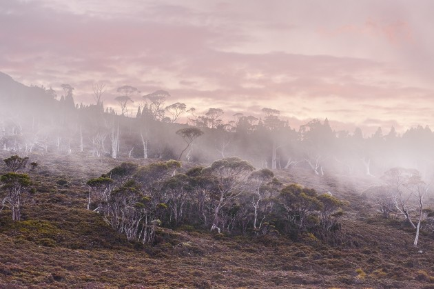 """One of the best tips I can give when photographing sunrises and sunsets is """"look behind you"""". I was on the Overland Track in Tasmania, photographing a beautiful sunrise scene, when I turned around and saw an even more amazing view. The mist hovering over the landscape, coupled with the beautiful pink glow of the sunrise, made for a perfect setting for this image. Nikon D700, 150mm f/2.8 lens. 1/25s @ f11, ISO 800."""