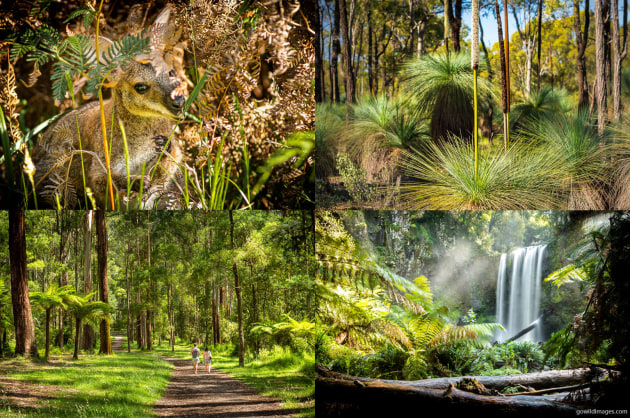 Mount Richmond NP, Heathcote-Graytown NP, Great Otway NP, Dandenong Ranges NP