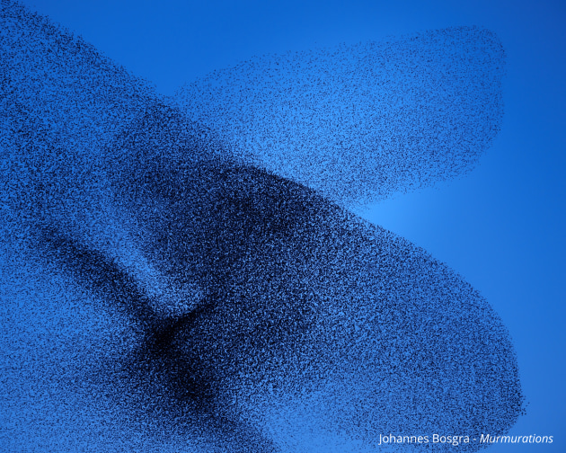 © Johannes Bosgra. Murmurations. Nature Photographer of the Year. Starling murmurations form abstract landscapes in the sky in a sublime musical rhythm. Tens of thousands of starlings fly in swooping, intricately coordinated patterns. This ballet is executed as a perfect choreography, the birds manage uncertainty while also maintaining consensus. Starlings accomplish this by paying attention to a fixed number of their neighbors in the flock, regardless of flock density — seven, to be exact. In following this role of seven, the birds are part of a dynamic system in which the parts combine to make a whole with emergent properties — and a murmuration results. Johannes Bosgra (b. 1979, NL) has travelled to the most desolate places on earth from a young age to create his contemplative work, from Antarctica to Alaska. He is selected as GUP New Dutch Photography Talent 2020. Bosgra explores the links between classical music and visual art.