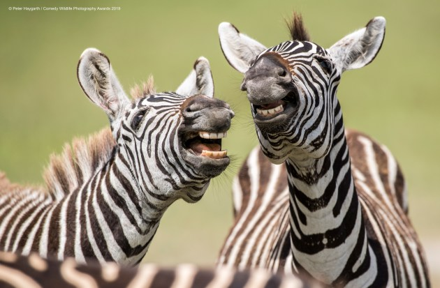 © Peter Haygarth / Comedy Wildlife Photo Awards 2019