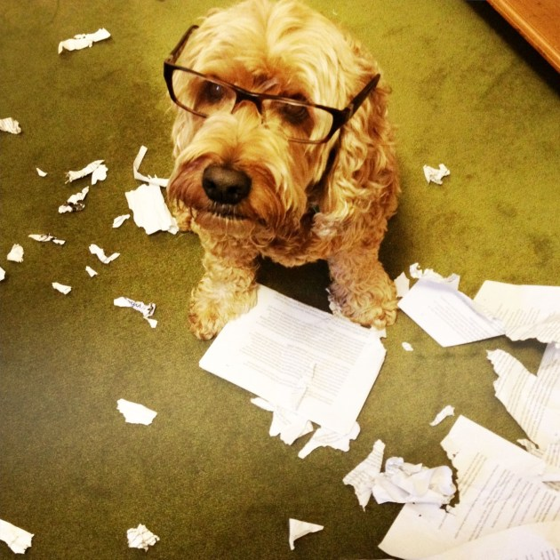 "© Anthony McKee -  My wife and I joke about having written ""good words"", those words you know will survive the editing process. After my dog Riley was allowed to shred some paper one afternoon I made this pic of him and titled it - ""I've found the good words!""."