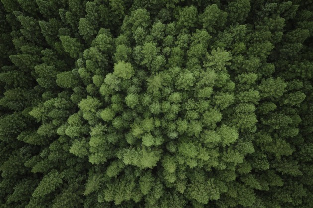 Soaring over the mighty redwoods of East Warburton, Victoria. Like the forest stream earlier, I cooled down the oranges and yellows to create a monochromatic colour harmony, simplifying the scene and allowing the striking patterns to do the heavy lifting visually. DJI Mavic 2 Pro, 28mm lens. 1/5s @ f4.5, ISO 100.