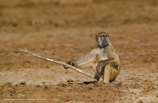© Willem Kruger / Comedy Wildlife Photo Awards 2019