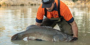 VIDEO: What effects will the recent bushfires have on our native fish?