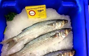 Renewed calls for more transparency in seafood labelling