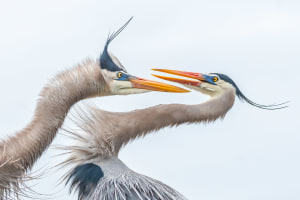 Audobon photography awards celebrate the best of bird photography