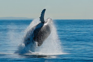 How to: Capture great whale photos