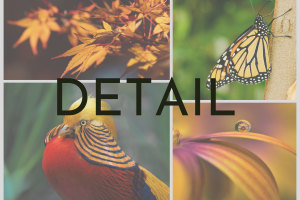 April 'Detail' Monthly Photo Comp: the shortlist!