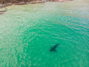 QLD SharkSmart drone trial: Have your say