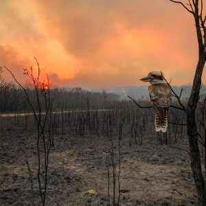 Bushfire image wins Australian National Award at the Sony World Photography Awards