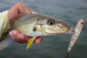 South east Queensland bream, whiting and flathead stock assessment
