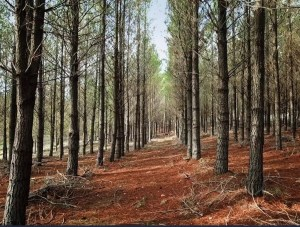 Impact launches world-first sustainable forest initiative