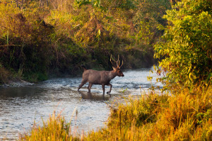 Man Fatally Shot On Sambar Hunting Trip