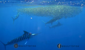 VIDEO: Marlin Magic