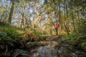 Get ready to explore Gondwana Rainforests of Australia
