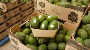 Avocado supplier smashes goals with Orora