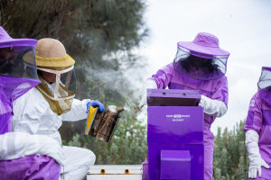 Purple Hive Project takes over Port of Melbourne
