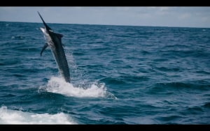 VIDEO: Tim Dean and Calypso Fishing Adventures
