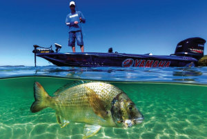 Gettin' crabby: How to use crab lures for bream