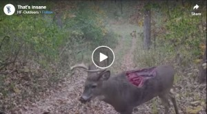 What Could Have Happened To This Deer?
