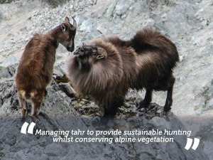 NZ Tahr cull - Hunters win concessions