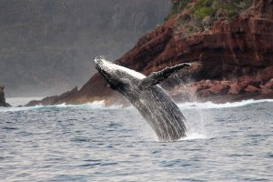 Go whalewatching with Light to Light Camps